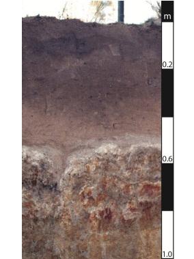 Sodosol soil in Leyburn, Queensland.