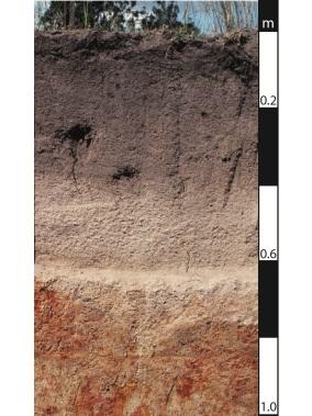Kurosol soil in Proston, Queensland.