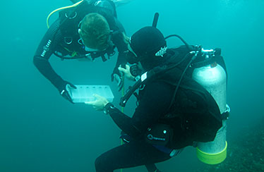 Image showing researchers collecting genetic samples of the grey nurse sharks in the Wolf Rock area.