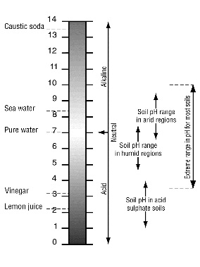 The range of pH values found in soils