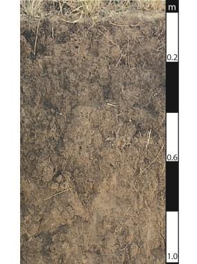 Dermosol soil in Wivenhoe Pocket, Queensland.