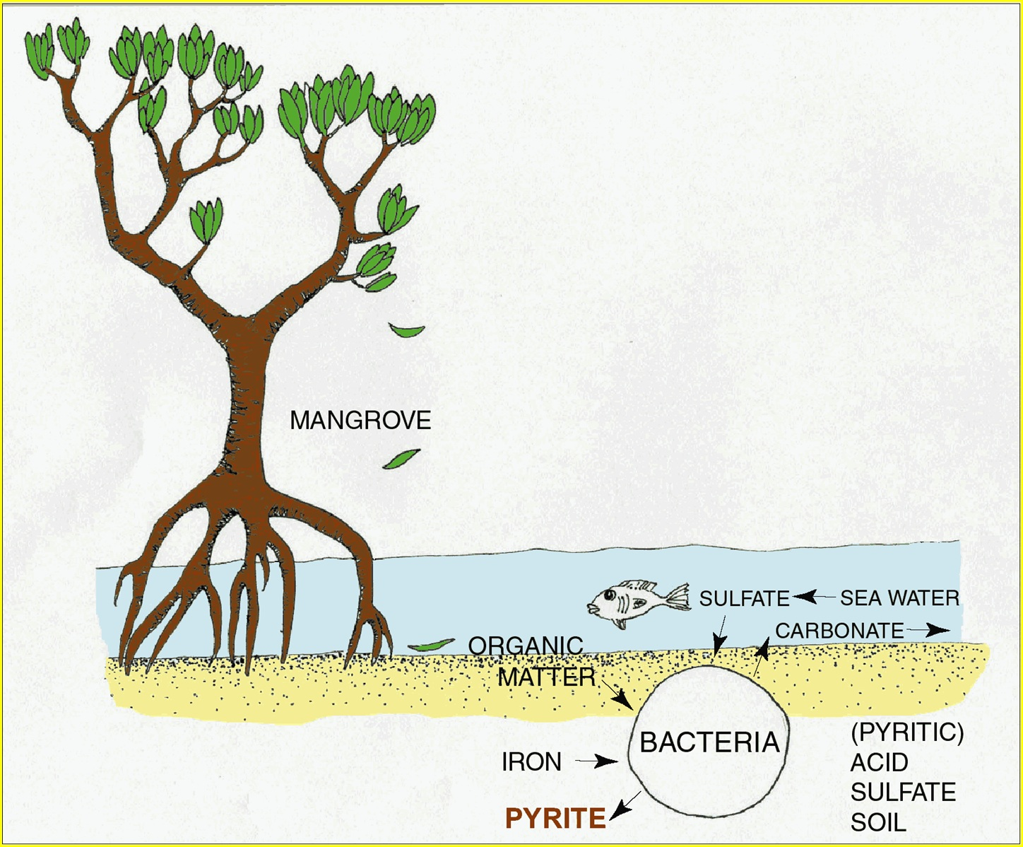 Acid sulfate soils explained environment land and water for Soil forming minerals
