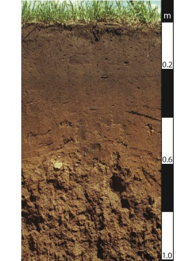 Chromosol soil in the Brisbane Valley, Queensland.