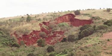 Example of mass movement landslip on a steep slope near Coolangatta, Queensland
