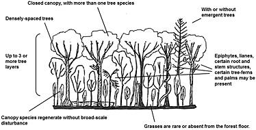 d3 tree diagram animationtransition