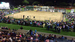 Field set up for bull riding event.