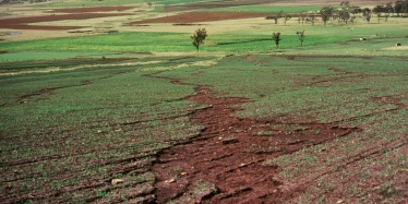 Rill and sheet erosion on a cultivated paddock