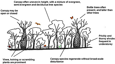 Diagram of dry rainforest structure