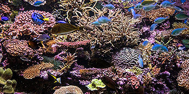 Colourful fish and coral on the reef.