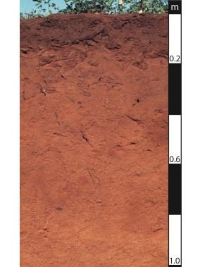 Kandosol soil in Roma, Queensland.