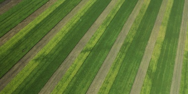 Strip cropping over a floodplain on the Darling Downs