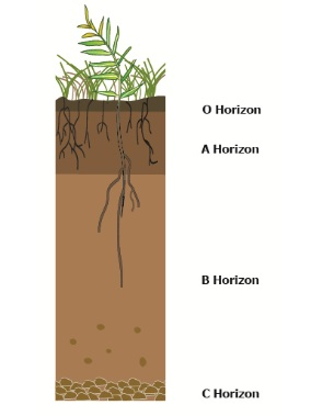 soil profile A soil profile is the sequence of natural layers, or horizons, in a soil each soil series consists of soils having major horizons that are similar in color, texture, structure, reaction, consistency, mineral and chemical composition, and arrangement in the soil profile.
