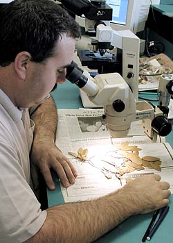 A botanist examining a specimen through a microscope.