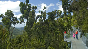 A section of the skywalk looking out over the rainforest.